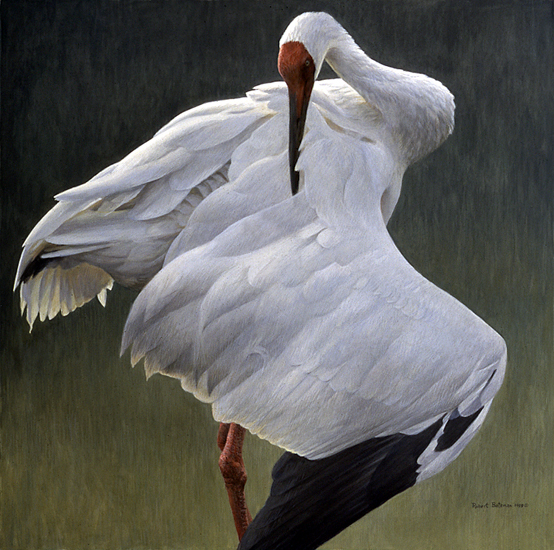 http://www.robertbateman.ca/paintings/DefensiveStandSiberianCrane.jpg