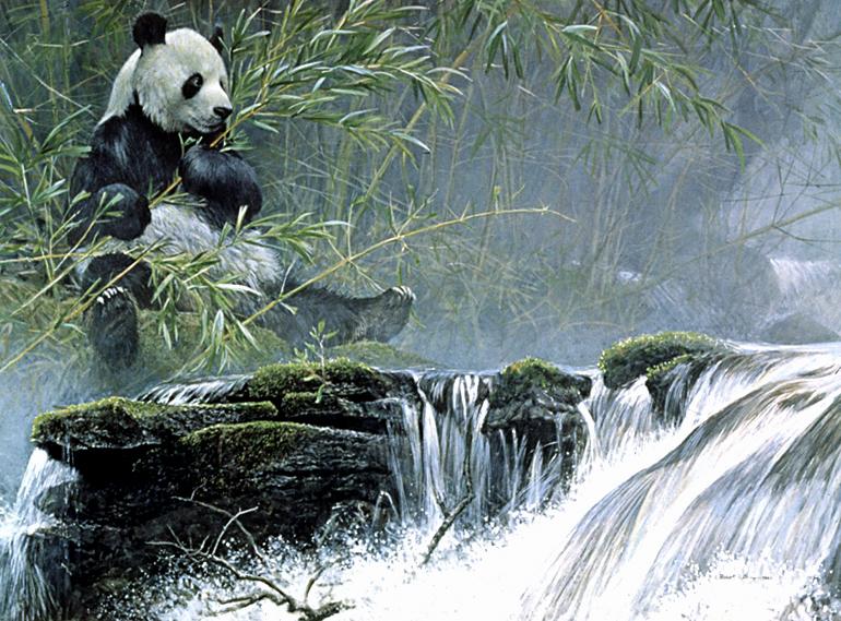 20 cosas acerca de los panda que no sabías