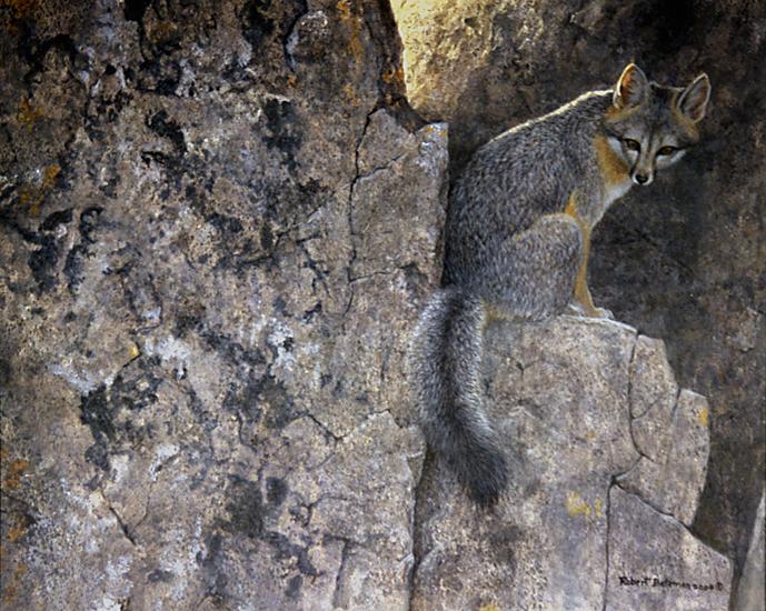 http://www.robertbateman.ca/paintings/GreyFox.jpg
